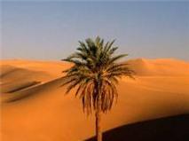 Sa mạc Internet