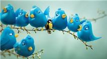 Chim Twitter nhận đàn