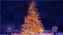 """Trò chơi """"Cây Giáng sinh"""" (bài 31)"""