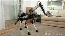 Robot thú cưng làm việc nhà